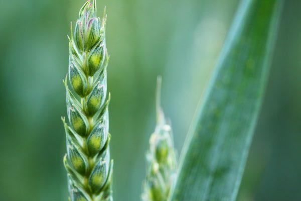 Vlastnosti zelených potravin